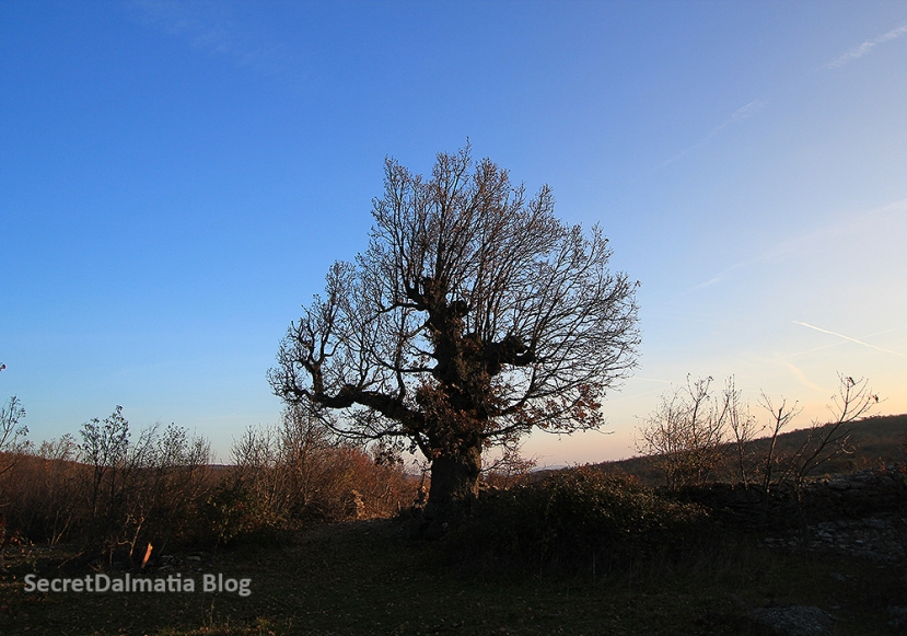 Winter Wanderings in Dalmatian Hinterland