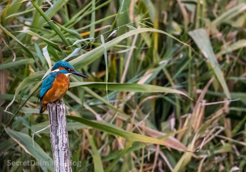 Wildlife and birding at Neretva River Delta