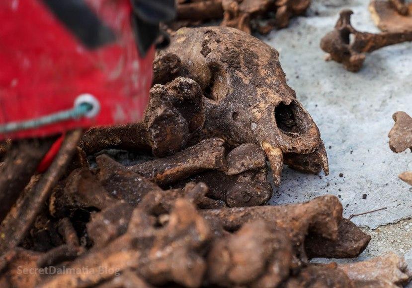 Rescuing the Bones of Prehistoric Bear andDeer